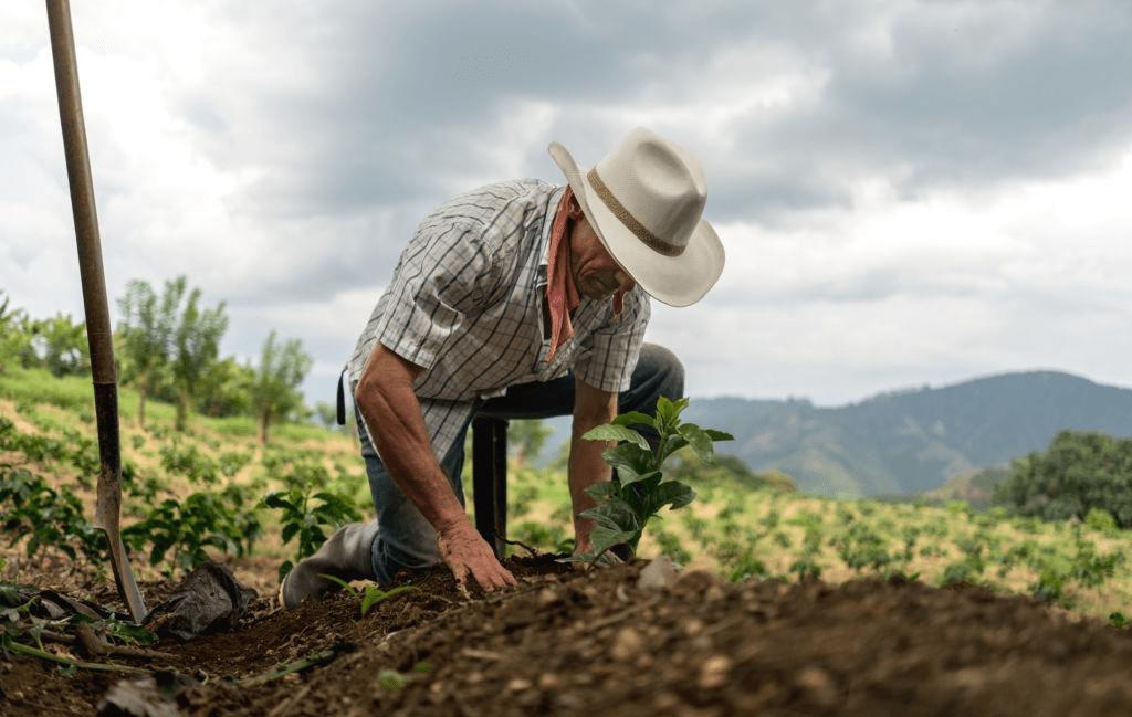 hombre sembrando café
