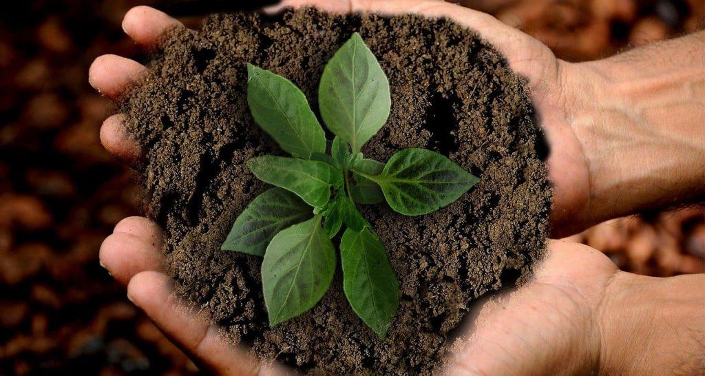 desarrollo de la tierra sostenible